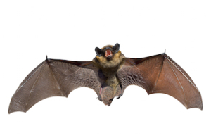 Get rid of unwanted bats - Atlanta Environmental can help