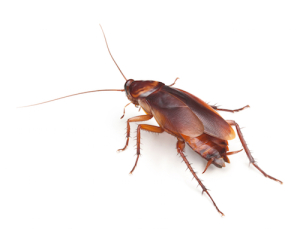 Eliminate roaches - contact Atlanta Environmental Pest Services