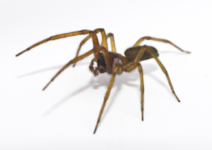 Kill Spiders Fast with Atlanta Environmental Pest Services