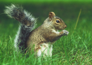 Keep critters away - get squirrel control now!