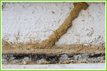 Mud Tubes - Signs you need termite control