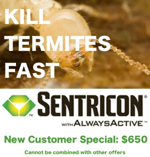 Get Sentricon termite protection for only $650