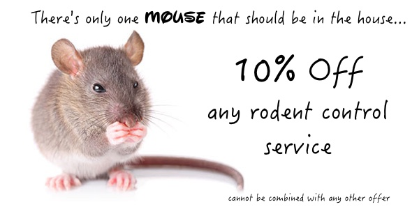 Discount on rodent control