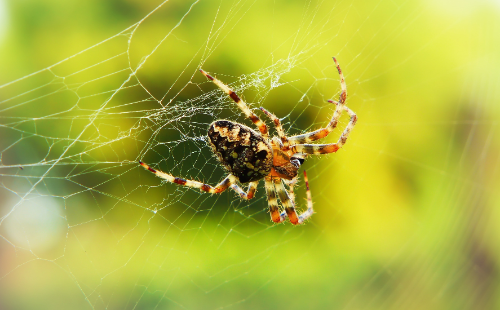 Residential & Commercial Pest Control In Woodstock